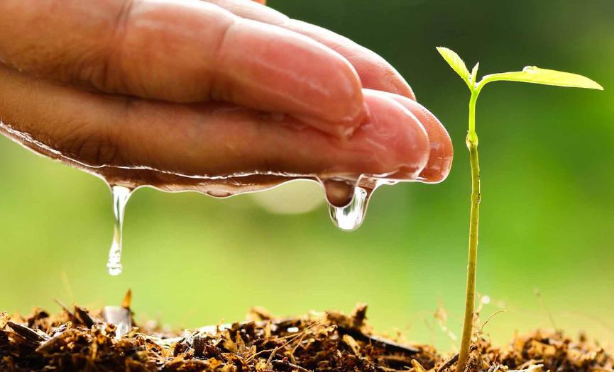 10 acciones que los consumidores pueden hacer por el medio ambiente