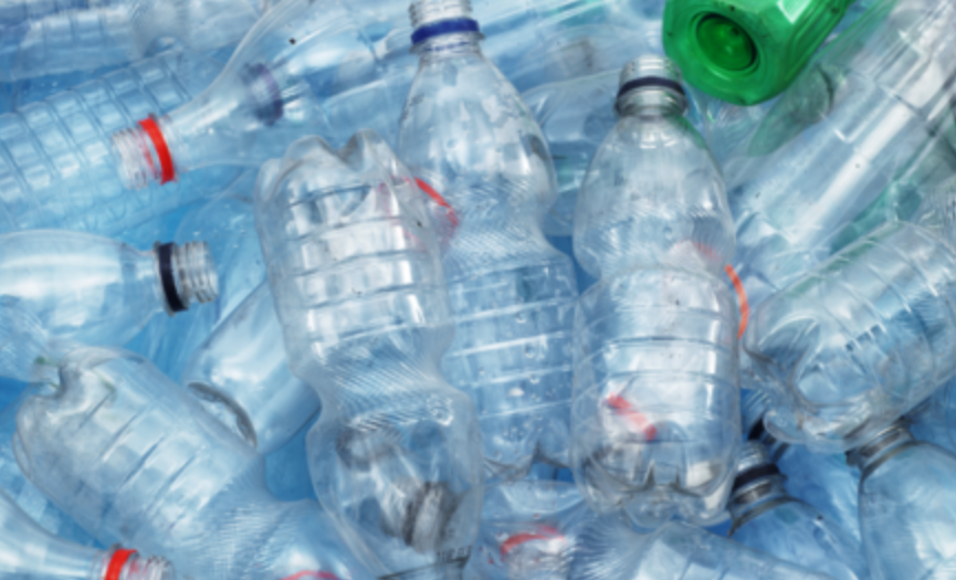 ¿Por qué los animales marinos no dejan de comer plástico?