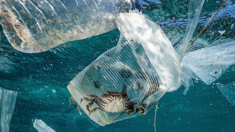 Día Mundial de los Océanos, 8 de junio