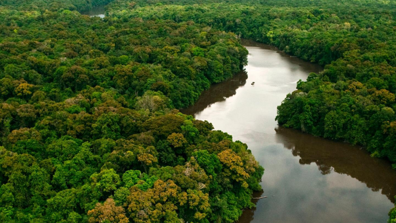 Qué se quema cuando arde la Amazonia